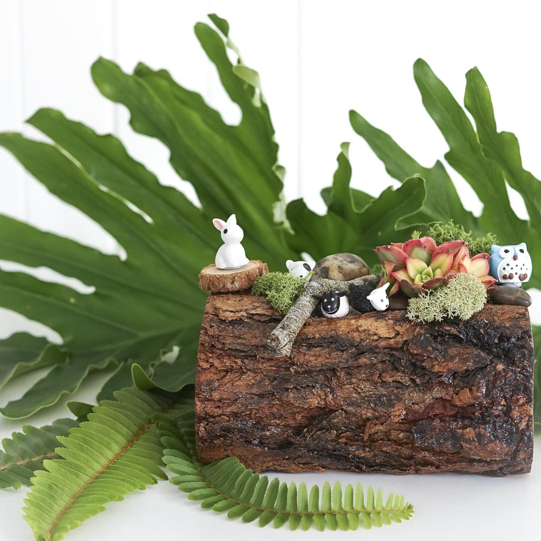 Terrarium Log